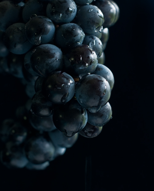 The Grapes of Roth, aka Concord grapes