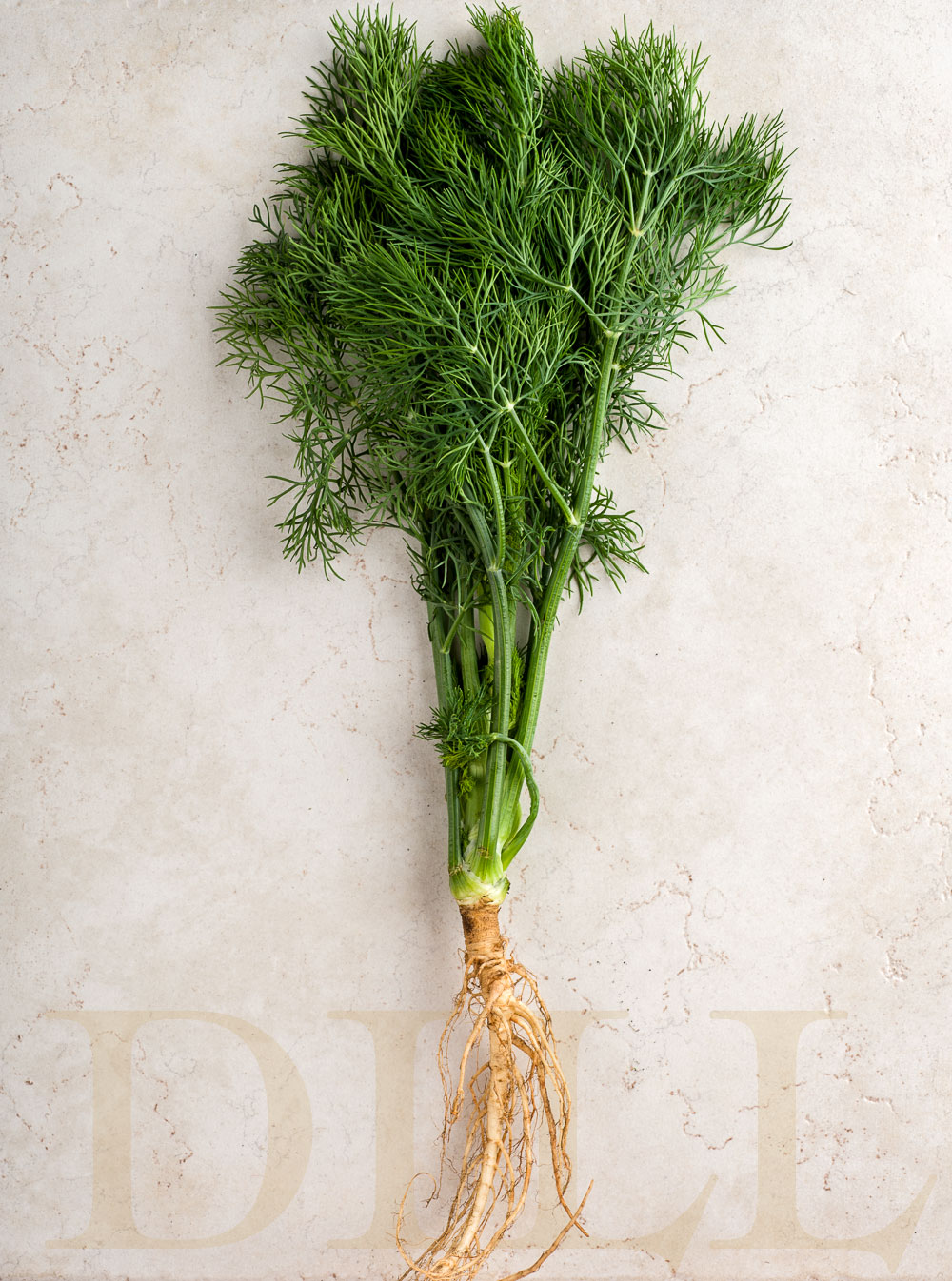 Dill | Minimally Invasive