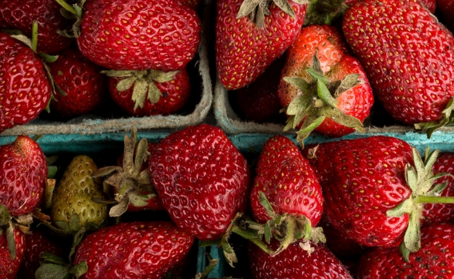Field to Feast: Strawberries & Rhubarb, Part I