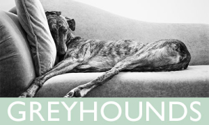 Purchase Greyhound Prints | Amy Roth Photo