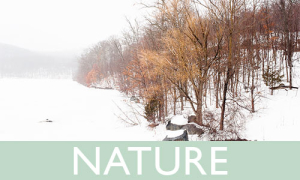 Purchase Nature Prints | Amy Roth Photo