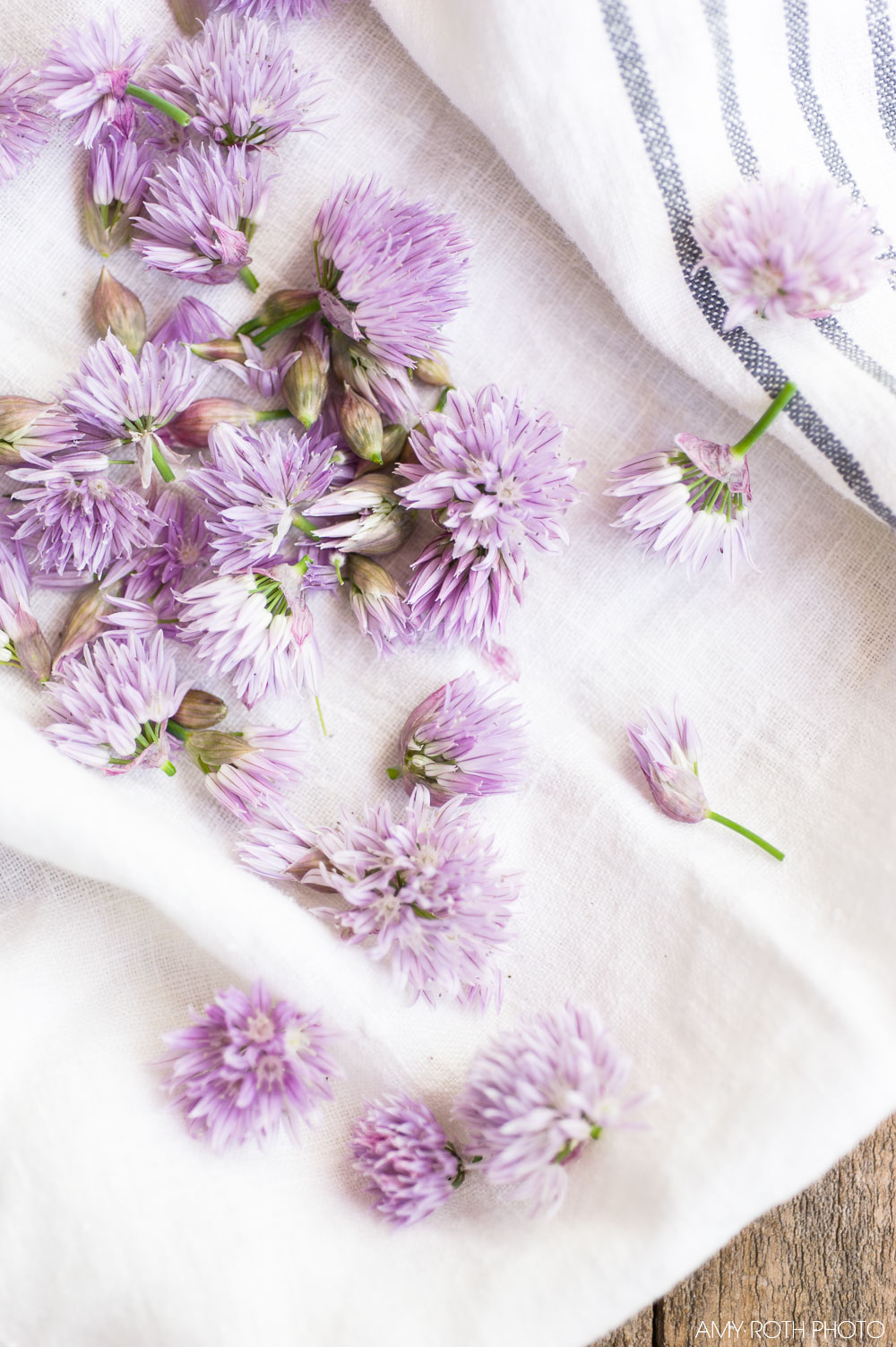 Chive Blossoms | Amy Roth Photo